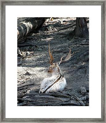 Stillness  Framed Print by Steven Digman