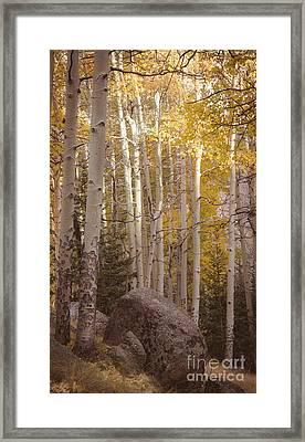 Framed Print featuring the photograph Stillness by The Forests Edge Photography - Diane Sandoval