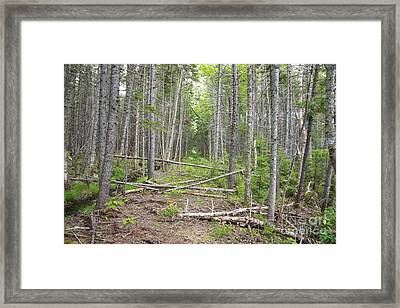 Stillwater Junction - White Mountains New Hampshire  Framed Print by Erin Paul Donovan