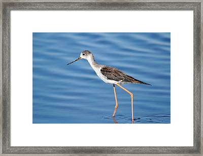 Framed Print featuring the photograph Stilt by Richard Patmore