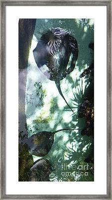 Framed Print featuring the photograph Stingray Swim V by Francesca Mackenney