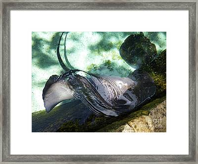 Framed Print featuring the photograph Stingray Wave by Francesca Mackenney