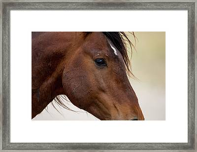 Eye To The Soul Framed Print