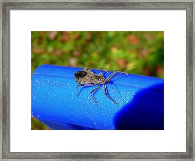 Stinky Framed Print by Kirk Long