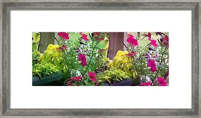 Stitched Flower Pot Photograph Framed Print by Laurie Kidd
