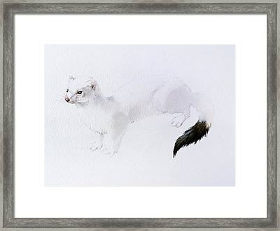 Stoat Watercolor Framed Print by Attila Meszlenyi