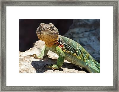 Stoic Lizard Framed Print by Mark A Brown