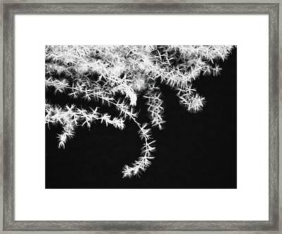 Stolen Beauty Framed Print