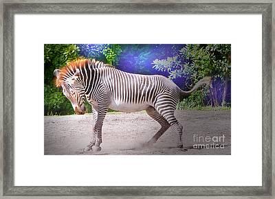 Stomp Framed Print by Judy Kay