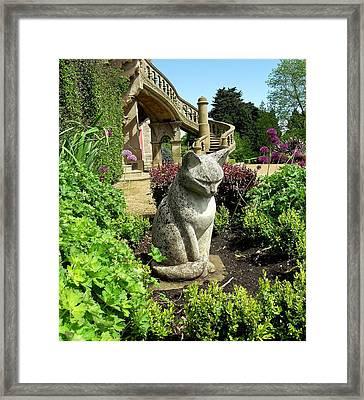Stone Cat Framed Print by Patrick J Murphy