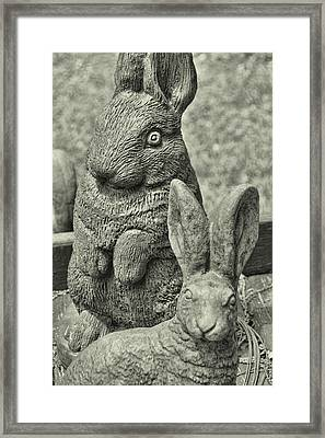 Stone Bunnies Framed Print by JAMART Photography