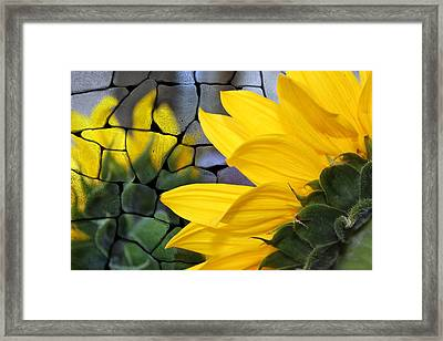 Stoned Sunflower Framed Print by Barbara Chichester
