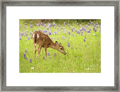 Stop And Smell The Bluebonnets. Framed Print