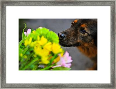 Stop And Smell The Flowers Framed Print by Mandy Wiltse