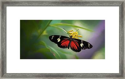 Framed Print featuring the photograph Butterfly, Stop And Smell The Flowers by Cindy Lark Hartman