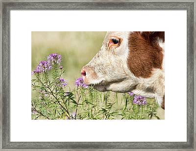 Stop And Smell The Thistle Framed Print