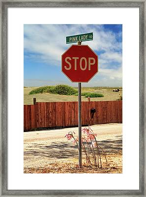 Stop For Naked Ladies Framed Print