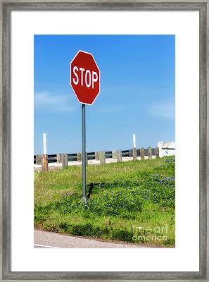 Stop For The Blue Bonnets Framed Print by Joan Bertucci