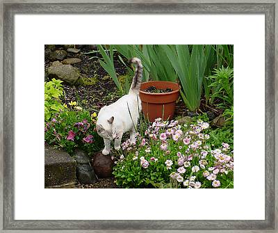 Stop To Smell Flowers Framed Print
