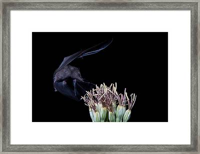 Stopping By For A Snack Framed Print by E Mac MacKay