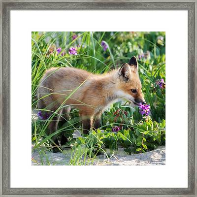 Stopping To Smell The Flowers Framed Print