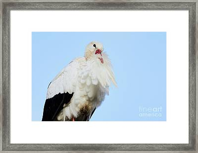Framed Print featuring the photograph Storck Closeup by Nick Biemans