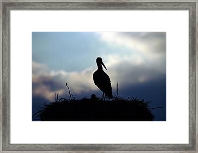 Stork In Evening Light Framed Print