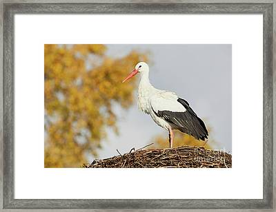 Framed Print featuring the photograph Stork On A Nest, Trees In The Background by Nick Biemans