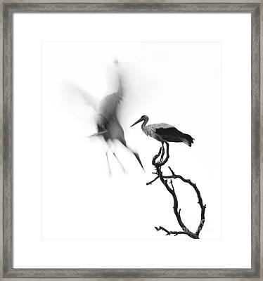 Storks Framed Print by Nahum Budin