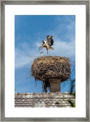 Storks Nesting In Munster Framed Print
