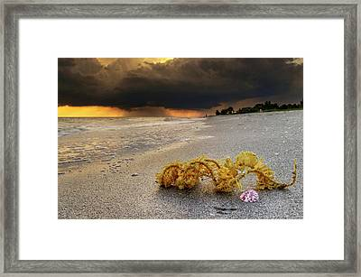 Storm And Sea Shell On Sanibel Framed Print