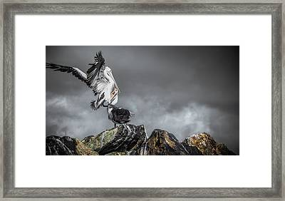 Storm Birds Framed Print
