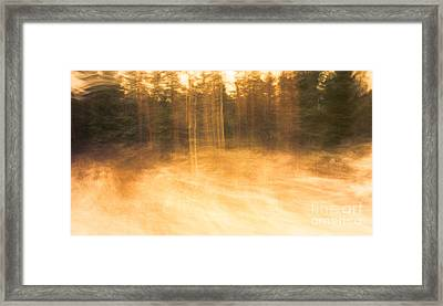 Storm In The Forest Framed Print