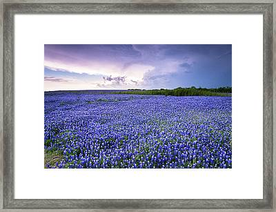 Storm Is Coming In Wildflower Field - Bluebonnet Framed Print by Ellie Teramoto