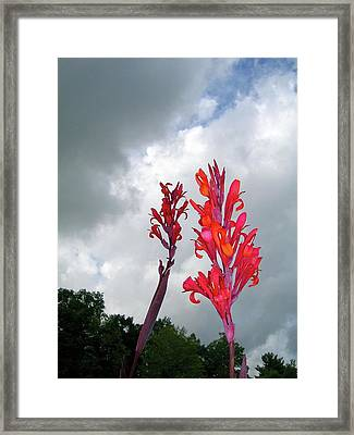 Storm Lorn Cannas Framed Print by Randy Rosenberger