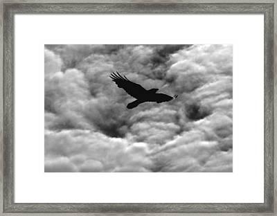 Storm Raven -k Framed Print by Daniel Furon