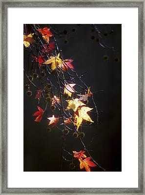 Storm's Bliss Framed Print