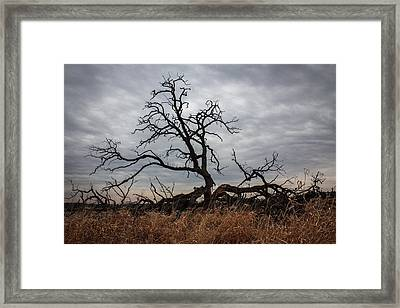 Storms Make Trees Take Deeper Roots  Framed Print