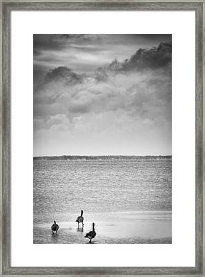 Canada Geese - Currituck Sound Framed Print