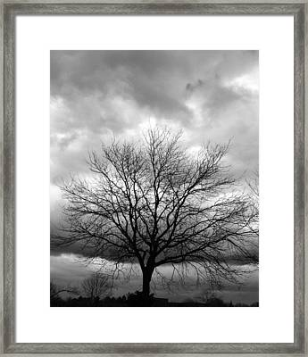 Stormy 2 Framed Print by Joanne Coyle