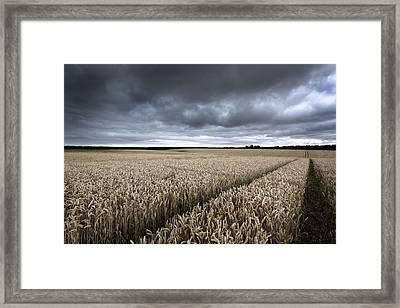 Stormy Cornfields Framed Print