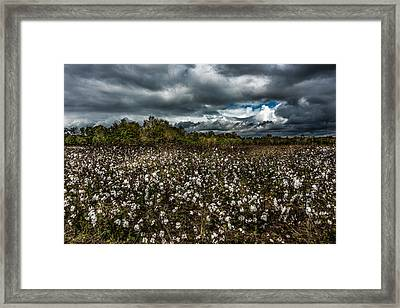 Stormy Cotton Field Framed Print