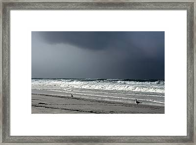 Framed Print featuring the photograph Stormy by Debra Forand