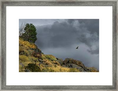 Framed Print featuring the photograph Stormy Flight by Frank Wilson