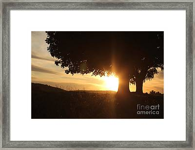 Story In Nature Framed Print by Everett Houser