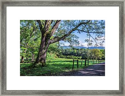 Story In The Smokies Framed Print