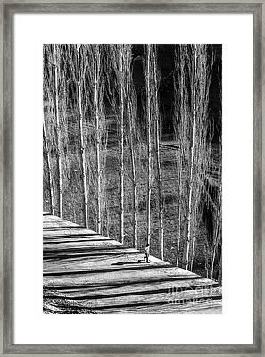 Story Of Light Framed Print
