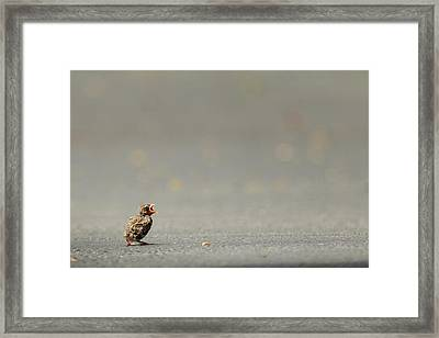 Story Of The Baby Chipping Sparrow 3 Of 10 Framed Print