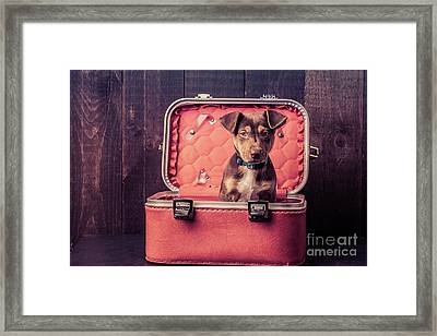 Stowaway  Framed Print by Edward Fielding