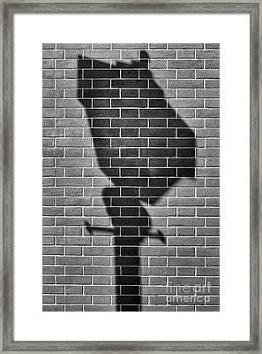 St.petersburg  #8125 Framed Print
